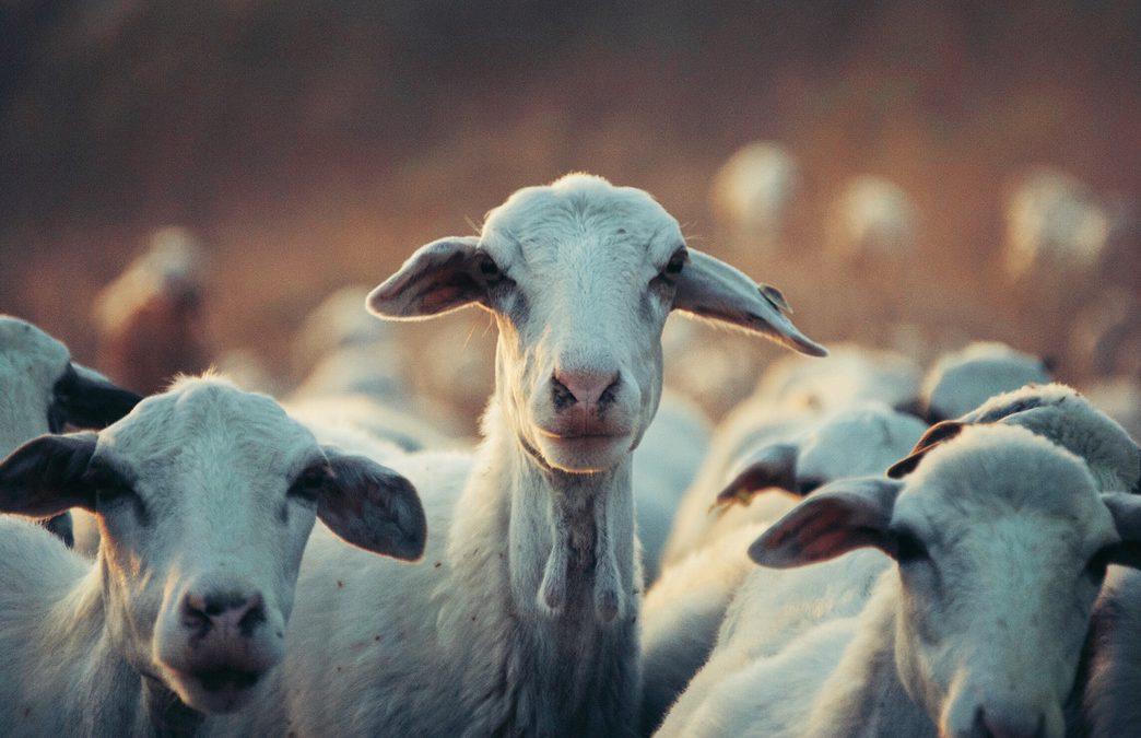 Geen geiten aan Griftdijk