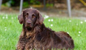 Honden nog niet belastingvrij